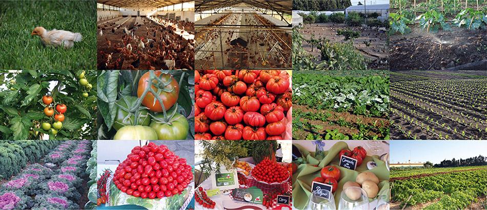 Vela Blanca. Agricultura y ganadería ecológica