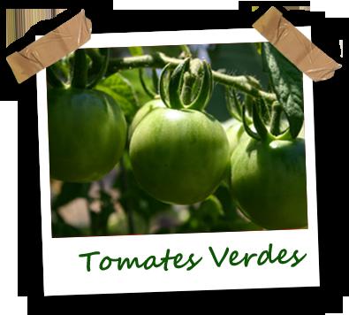Tomates verde ecológicos Vela Blanca